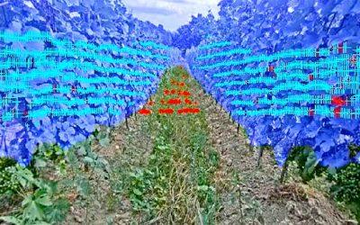 Robot Androver II sa pohybuje autonómne medzi riadkami vinohradu