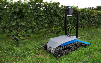 Crawler robot moves autonomously in the vineyard and mows the grass
